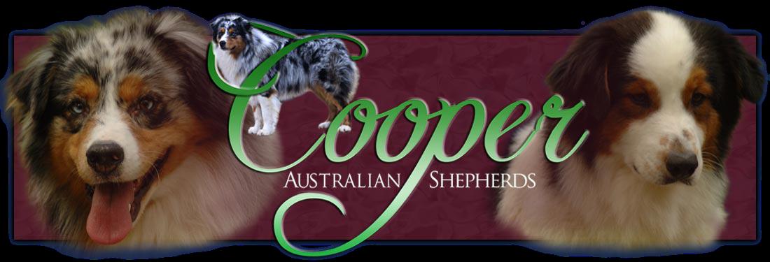 Home Cooper Australian Shepherds